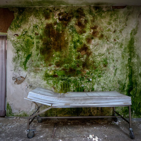 Grüner Schimmel an einer Wand